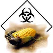 Toxic corn